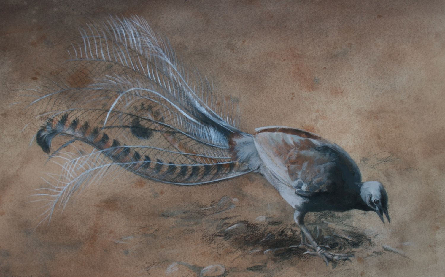 """Lyrebird"" mixed media"