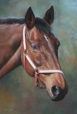 Retired Racehorse