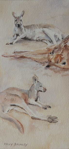 Macropods I - Just Chillin'