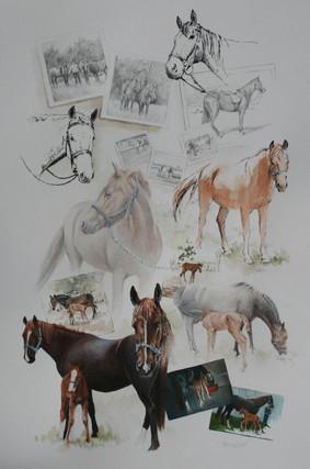 Jenny's Horses