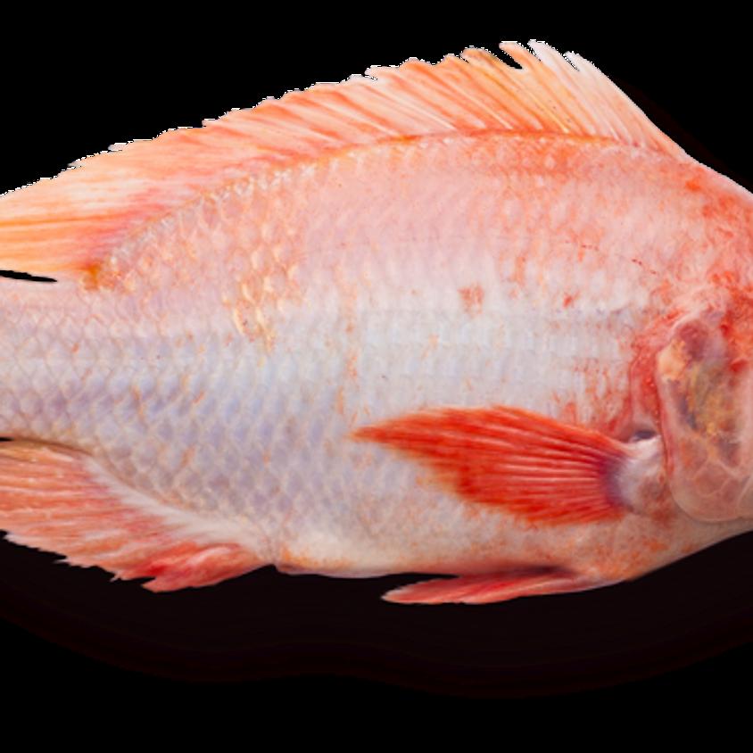 Fisk från torra land i butiken och i fiskdisken - fortbildning