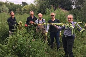 Staff volunteered to remove Himalayan Balsam from the Roman River near Colchester