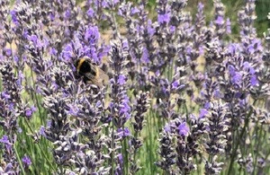 What are the simple actions that you can take this year to protect our pollinators?