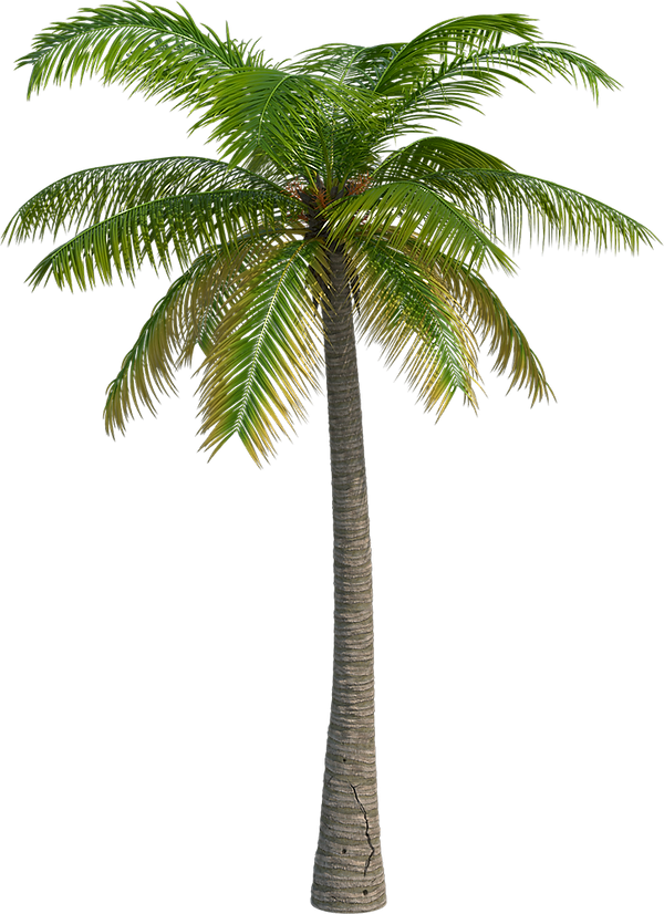 palm_edited.png