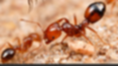 insects 027.PNG