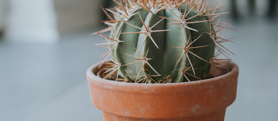 Grow Your Own Fishhook Barrel Cactus From Seeds