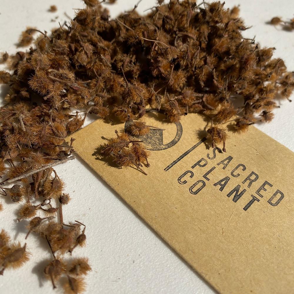 Sacred Plant Co Beauty Bush Seeds