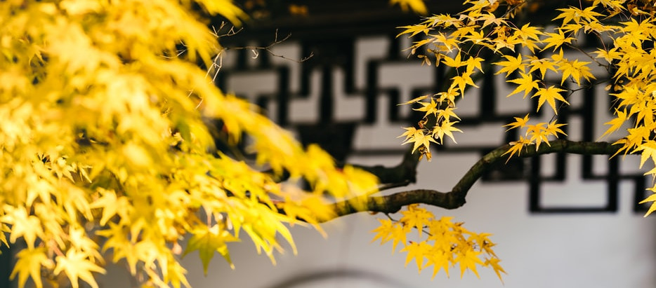 How to Grow Ginkgo Biloba Trees From Seed!