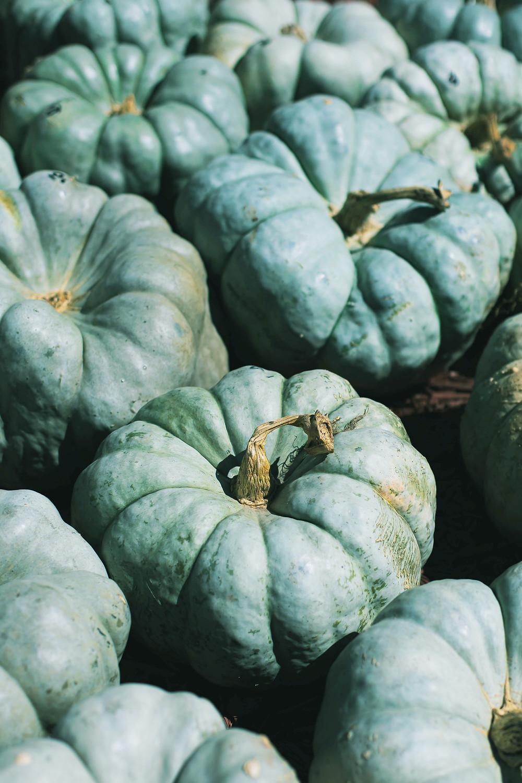 Sacred Plant Co Blue Doll Blue Pumpkins