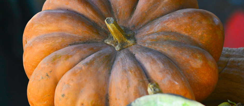 How to Grow Fairytale Musque de Provence Pumpkins from Seed!