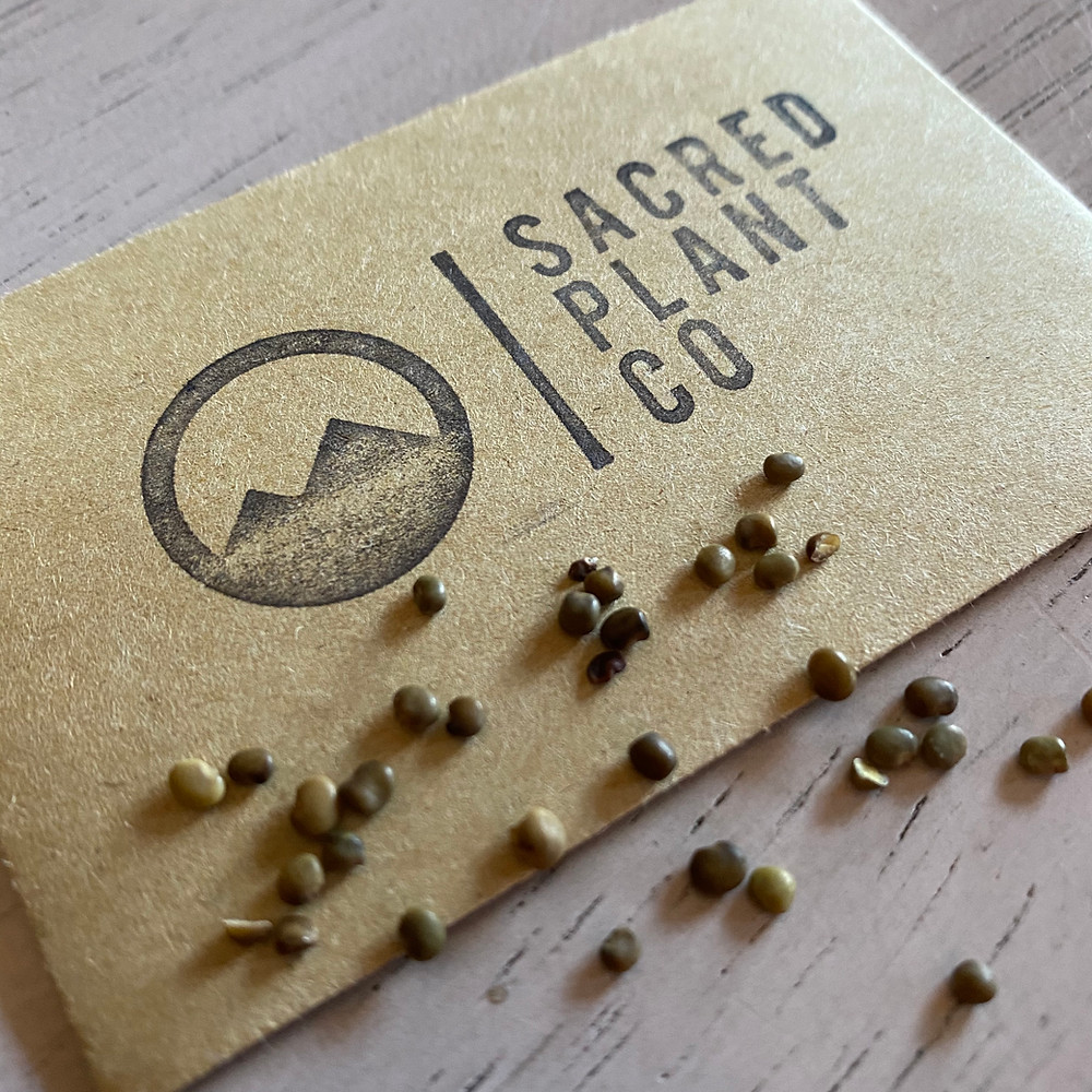 Sacred Plant Co Growing Licorice Seeds From Seeds