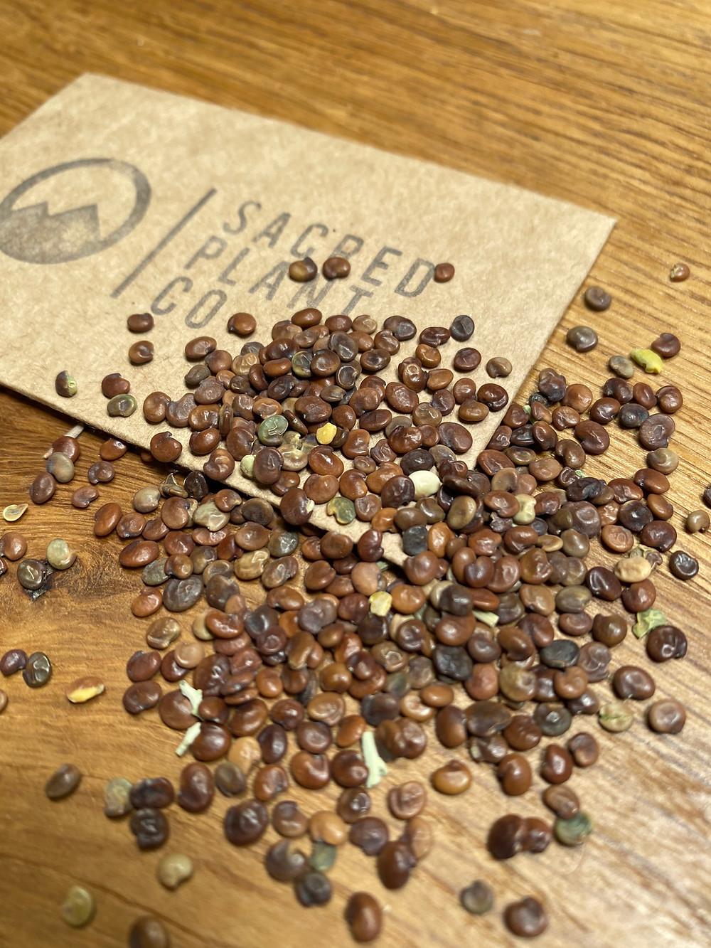 Sacred Plant Co Utah Sweetvetch Seeds
