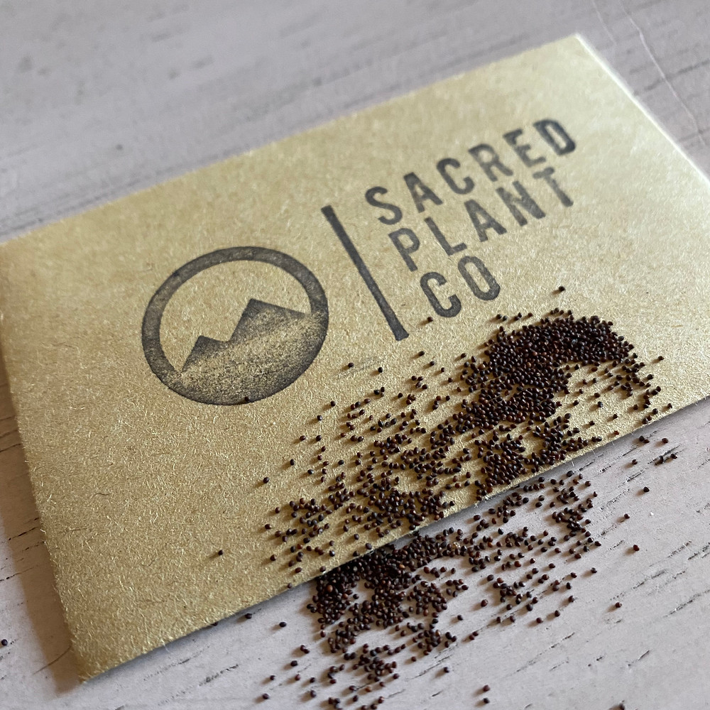 Sacred Plant Co Growing Spearmint Seeds From Seeds
