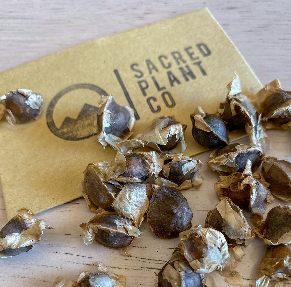 Sacred Plant Co Growing California Poppy From Seeds