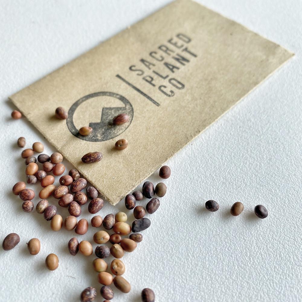 Sacred Plant Co Siberian Peashrub Seeds