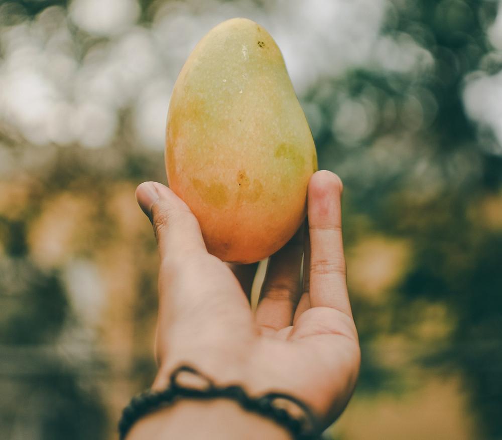 How To Grow Mango Trees