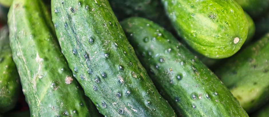 How to Grow Spacemaster Cucumbers From Seeds