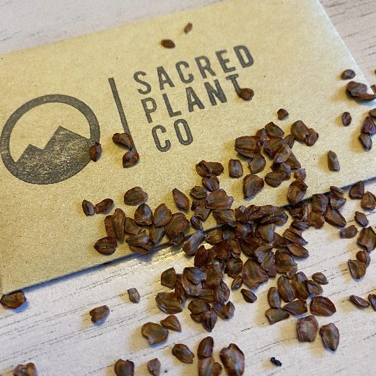 Sacred Plant Co Guide To Growing Dawn Redwood Seeds From Seeds