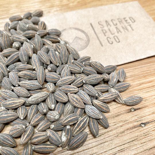 Bulk Wholesale Garden Seeds Colorado