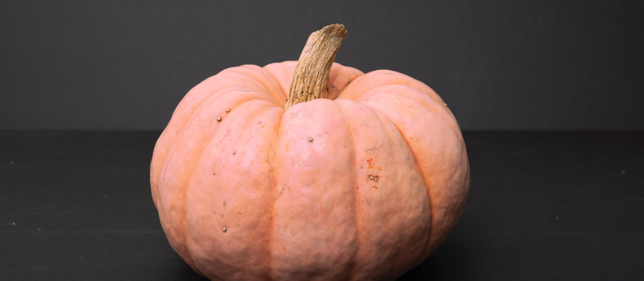 How to Grow Porcelain Doll Pink Pumpkin from Seed!