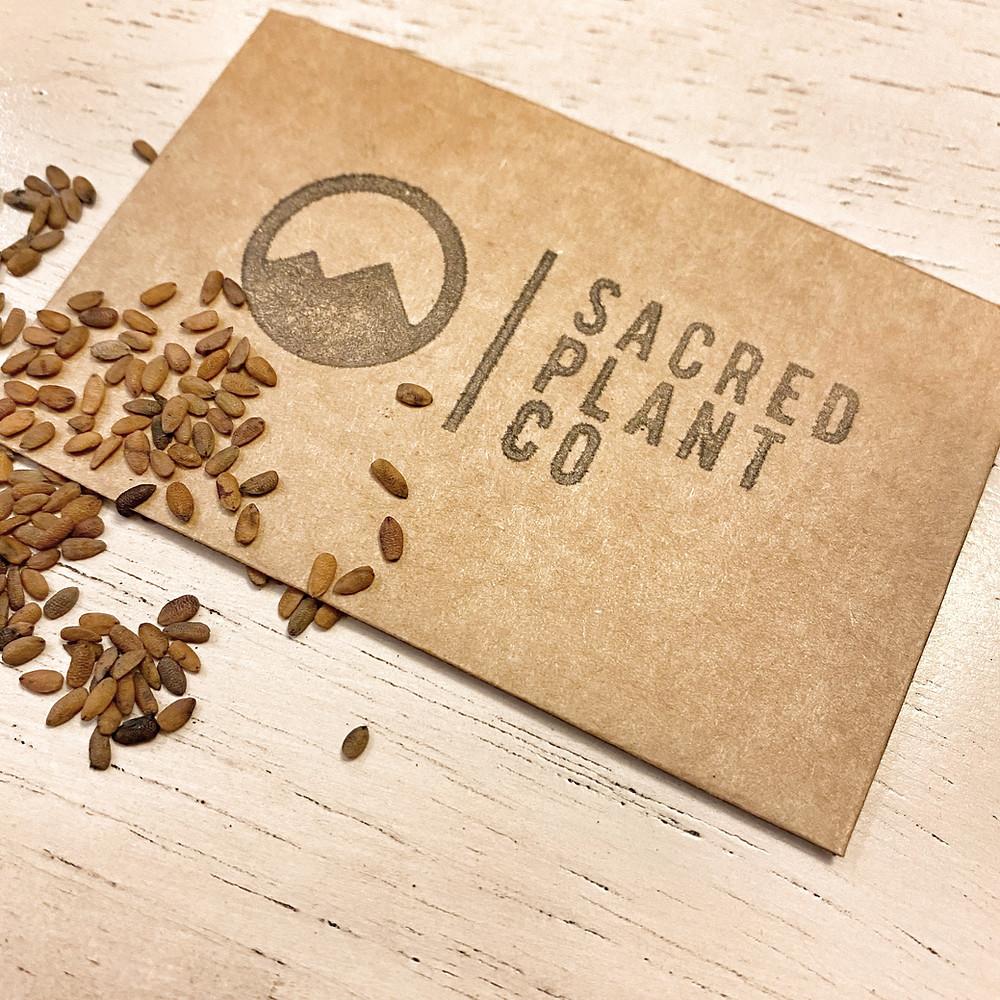 Sacred Plant Co Elderberry Seeds