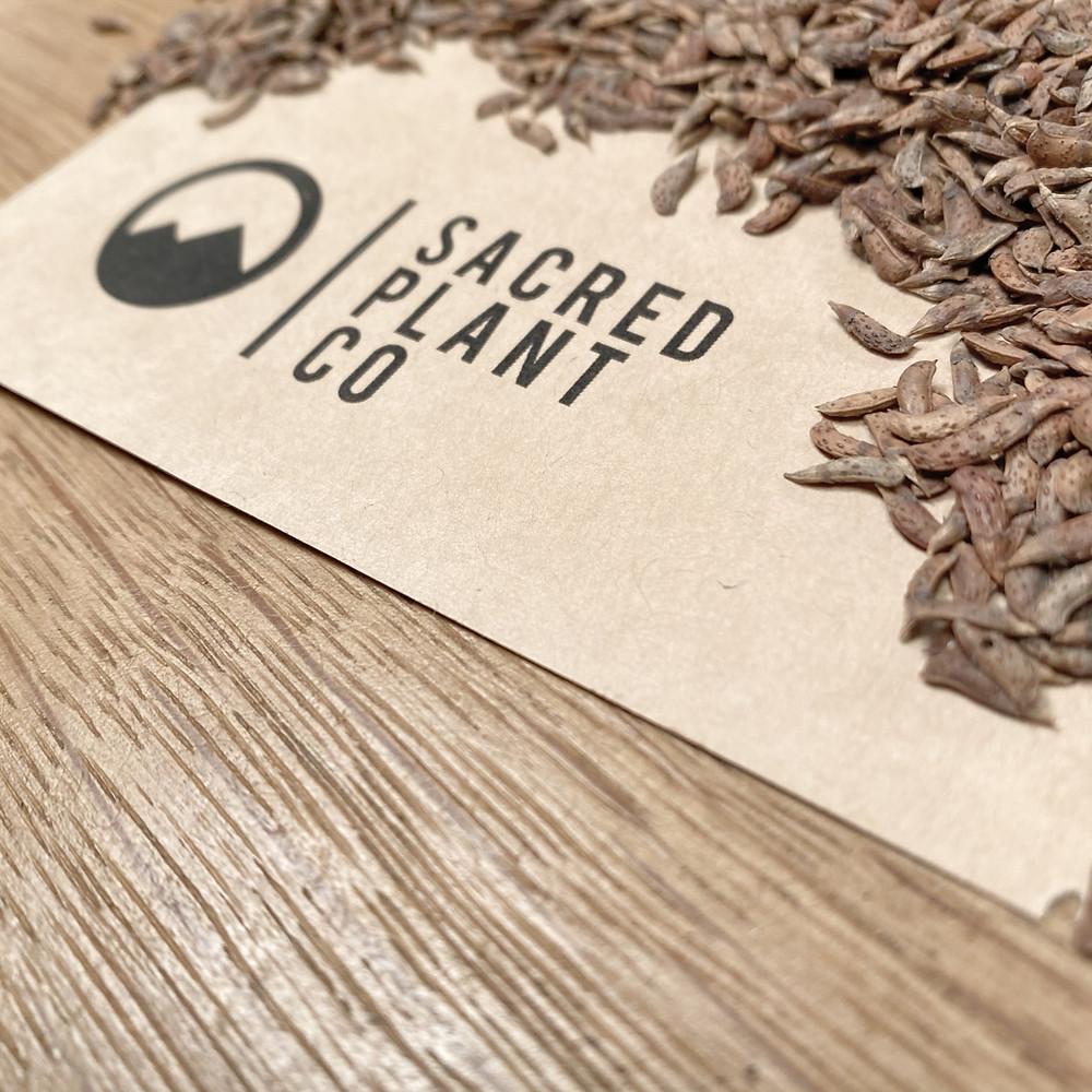 False Indigo Bush Seeds From Sacred Plant Co