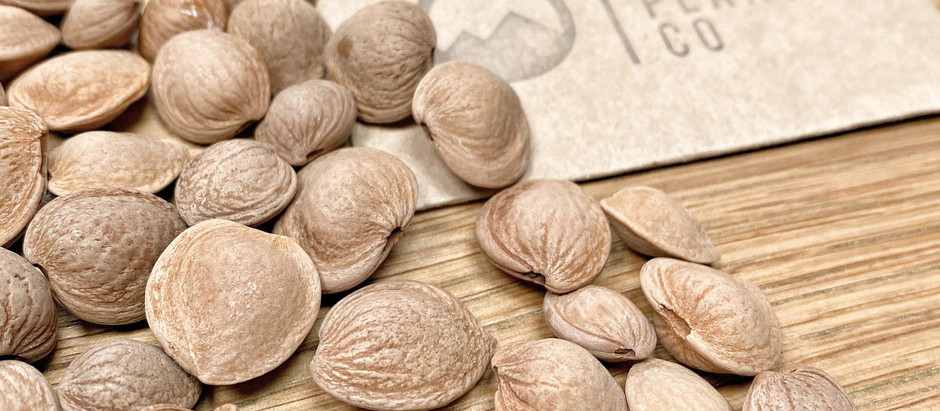 How to Grow Russian Almond Trees From Seed!