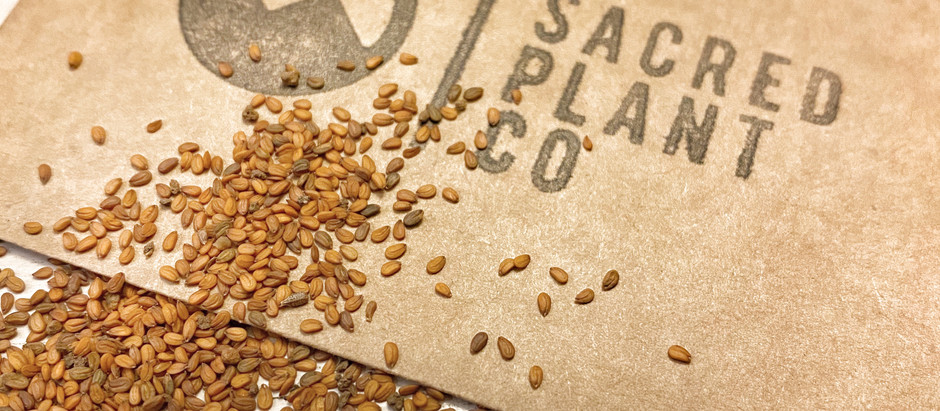 How to Grow Maca From Seeds