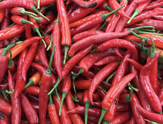 How to Grow Red Chili Hot Pepper Seeds From Seeds