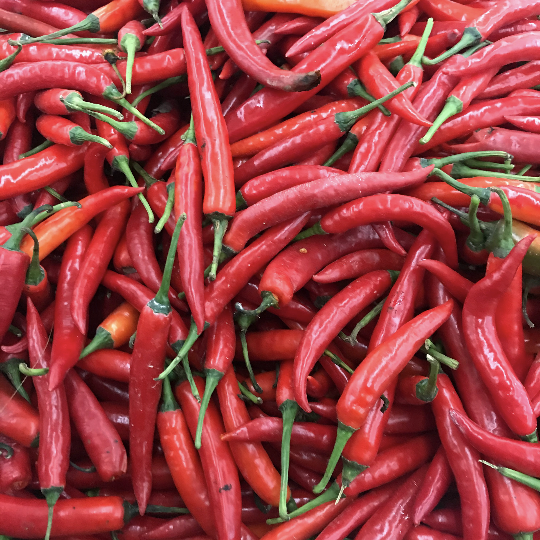 Sacred Plant Co Red Hot Pepper Plant Seeds