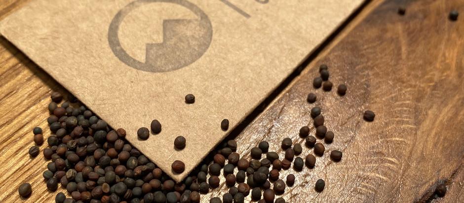 How to Grow Kohlrabi From Seeds!