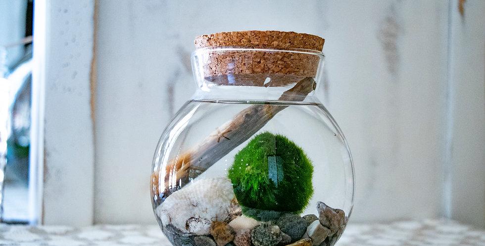 Sacred Plant Co Marimo Moss Ball