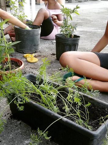 Plantio Horta Comunitá - Projeto Viva Bairro / Comunidade Cabritos Tabajaras / RJ