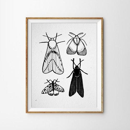 Motten Print
