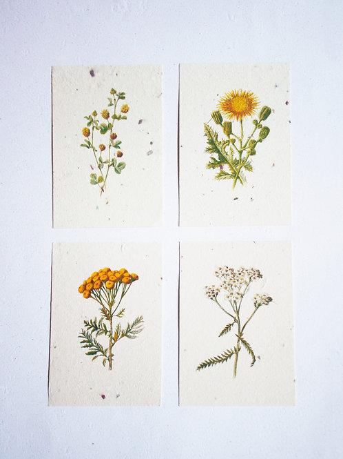 Kit Floral 02  I  A6