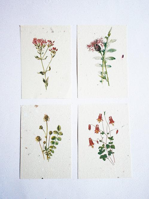 Kit Floral 01  I  A6
