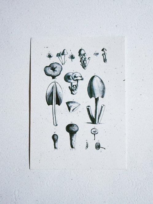 Cogumelos PB  I  A5