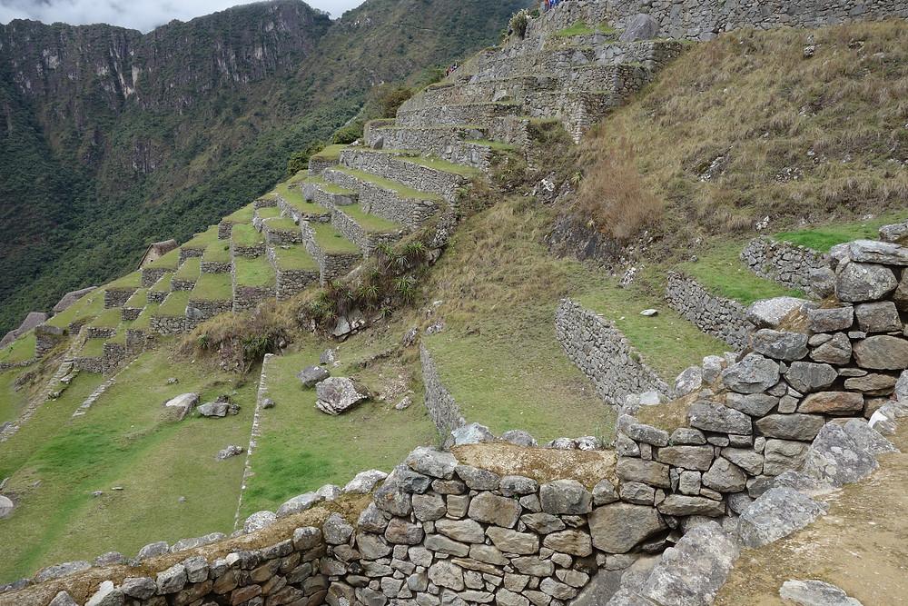 Machu Picchu terrasses