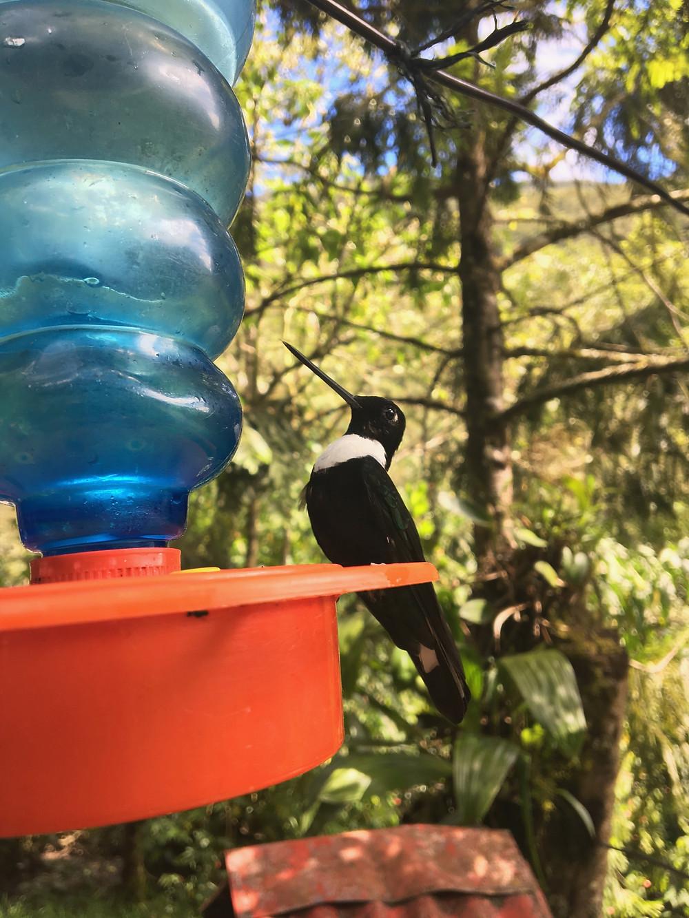 casa de colibri