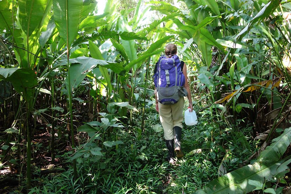 3 jours de trek en Amazonie