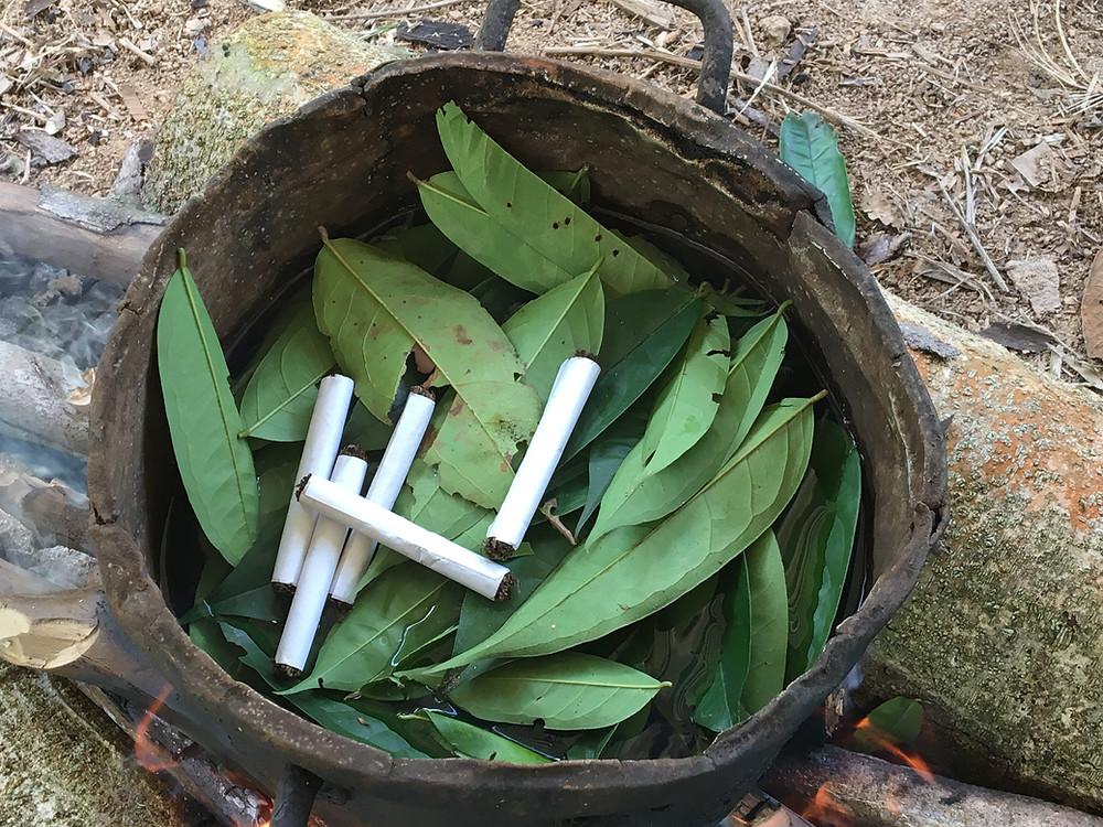 la préparation ayahuasca