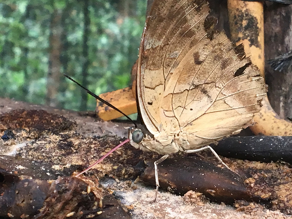 papillon qui mange