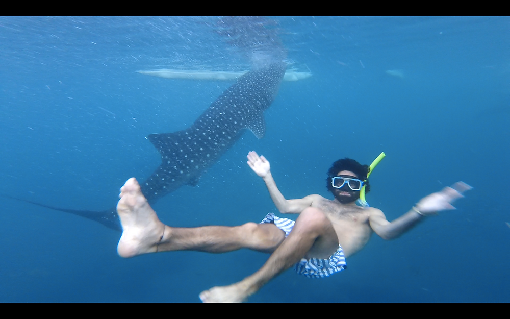 requin baleine à oslob