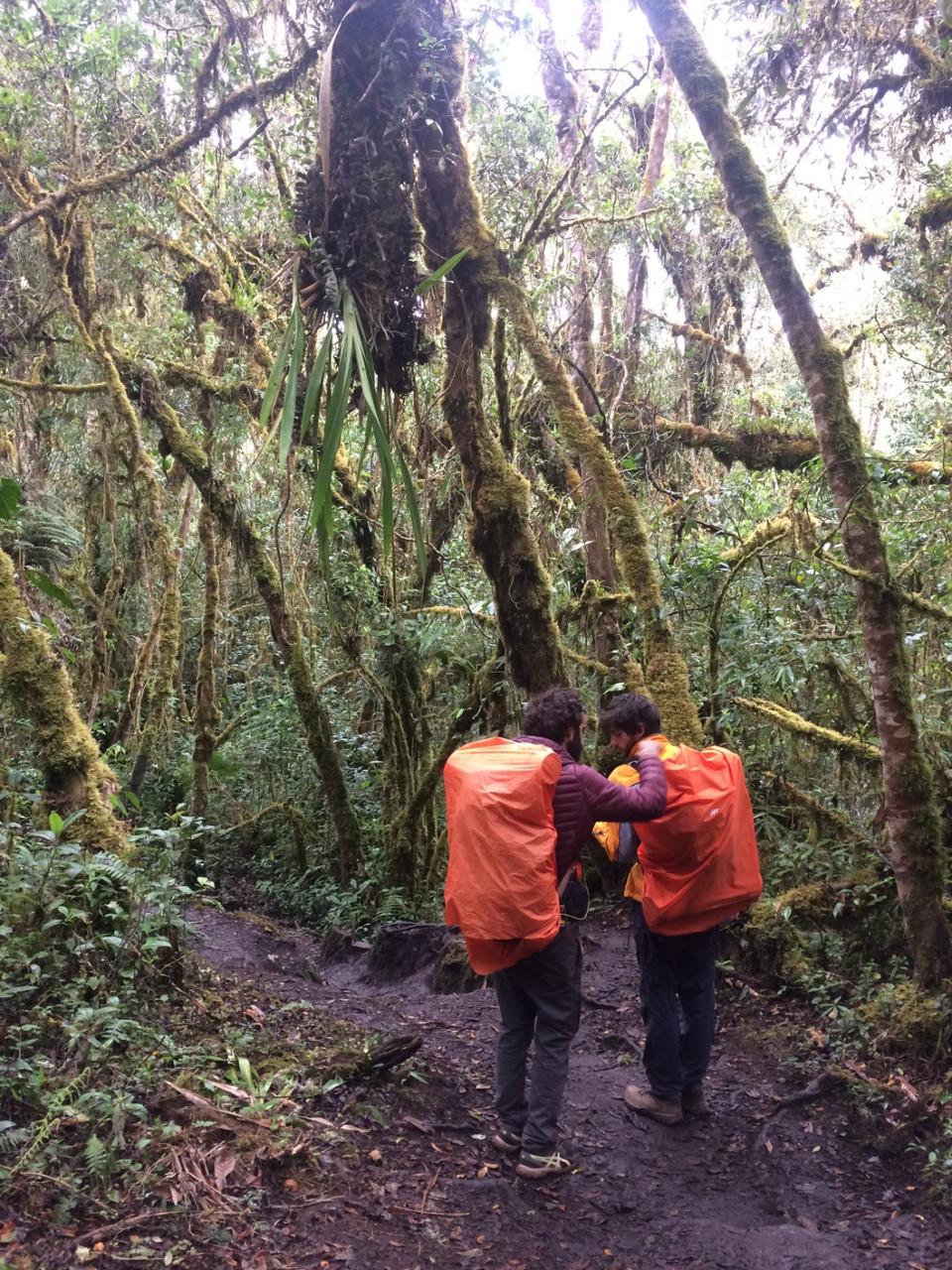 Salkantay Trek - forêt