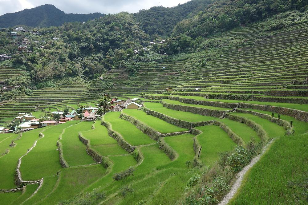 rizières Batad