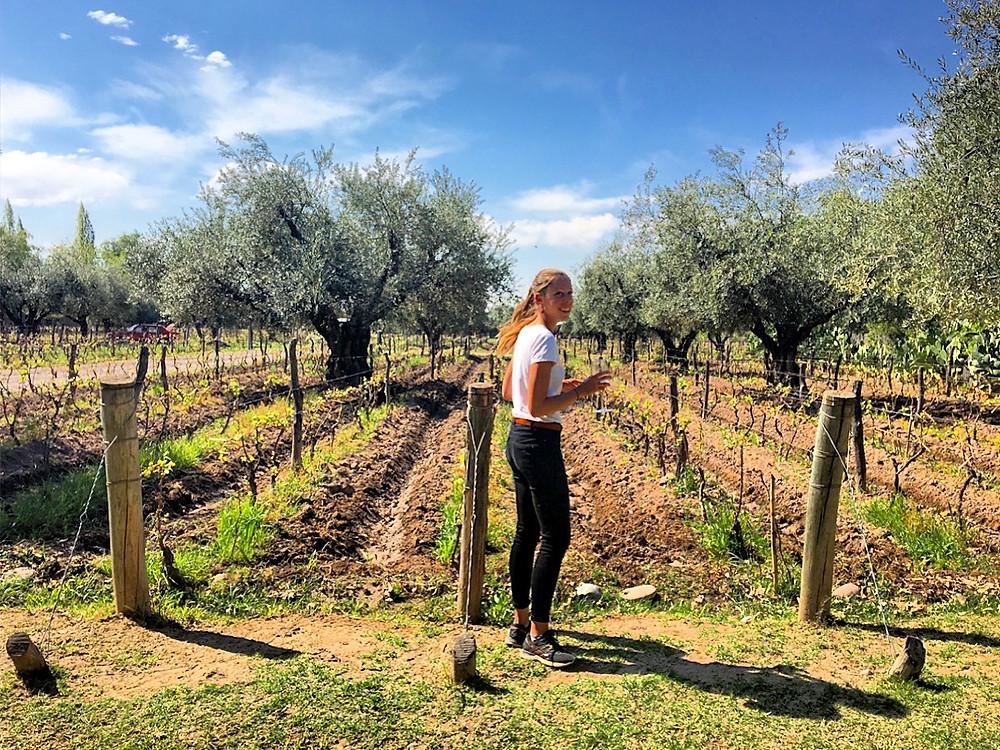 Mendoza et la route des vins