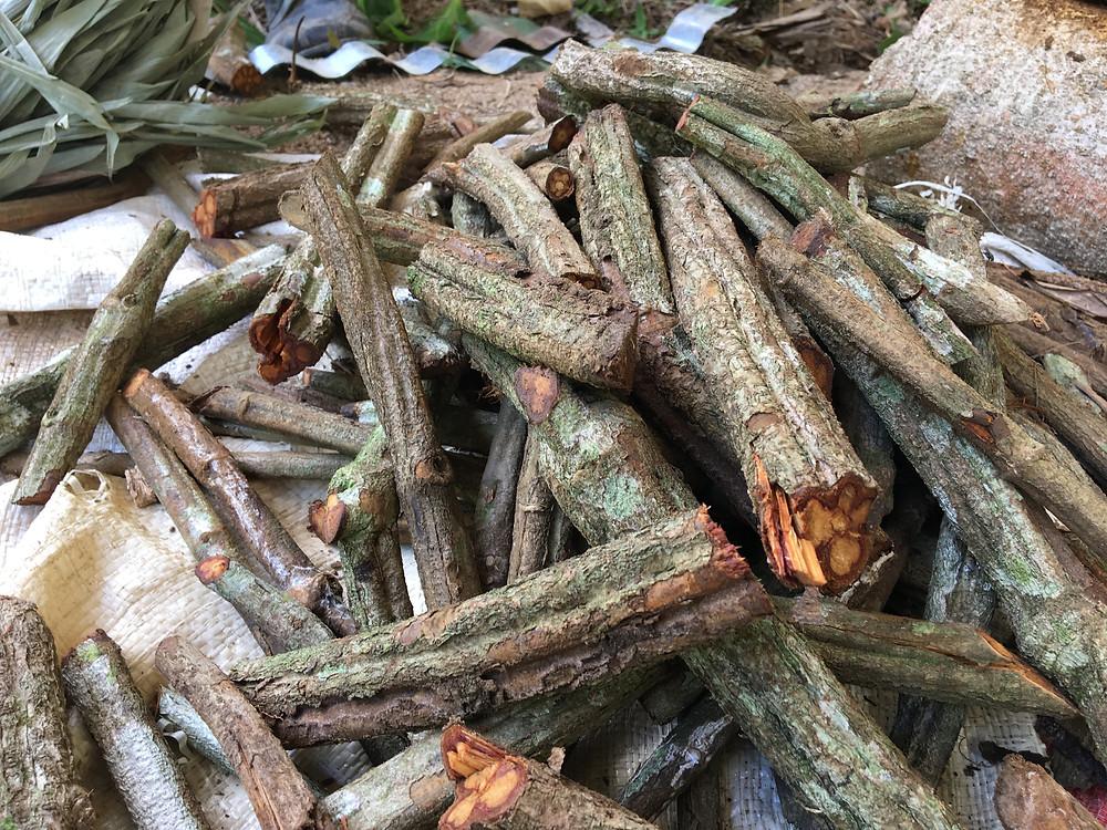 la liane ayahuasca
