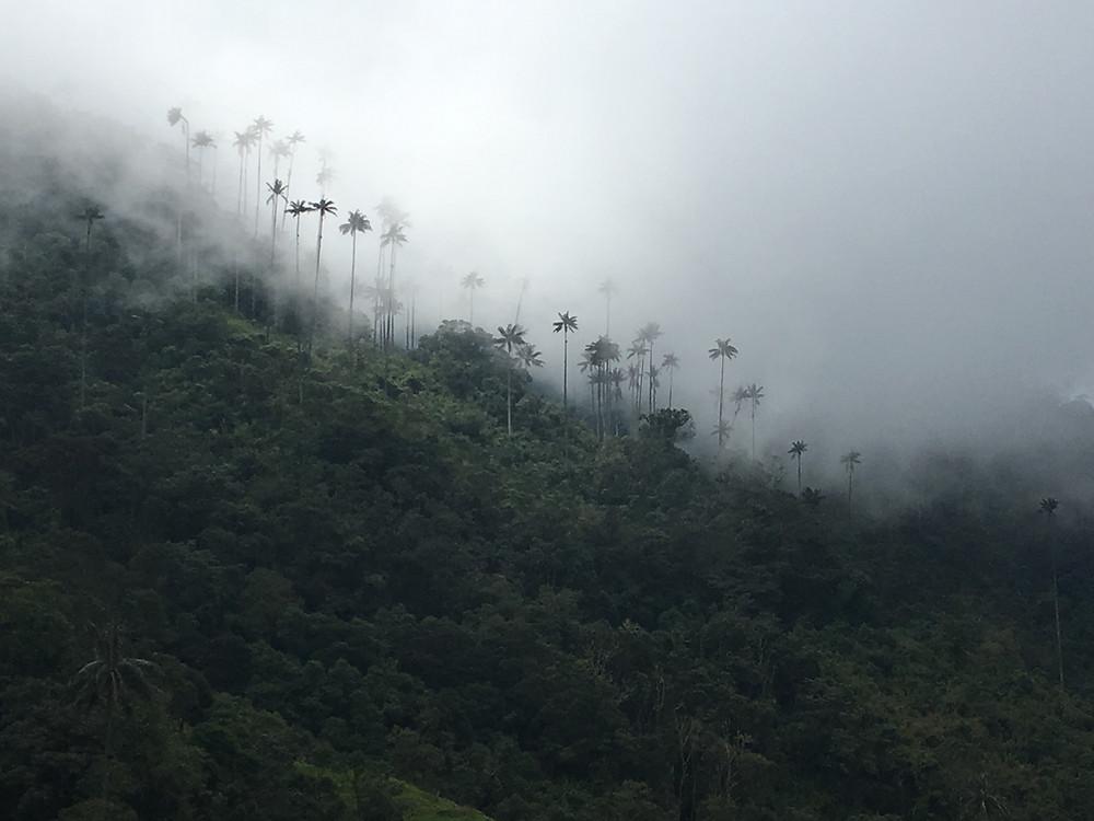 valle de cocora dans la brume