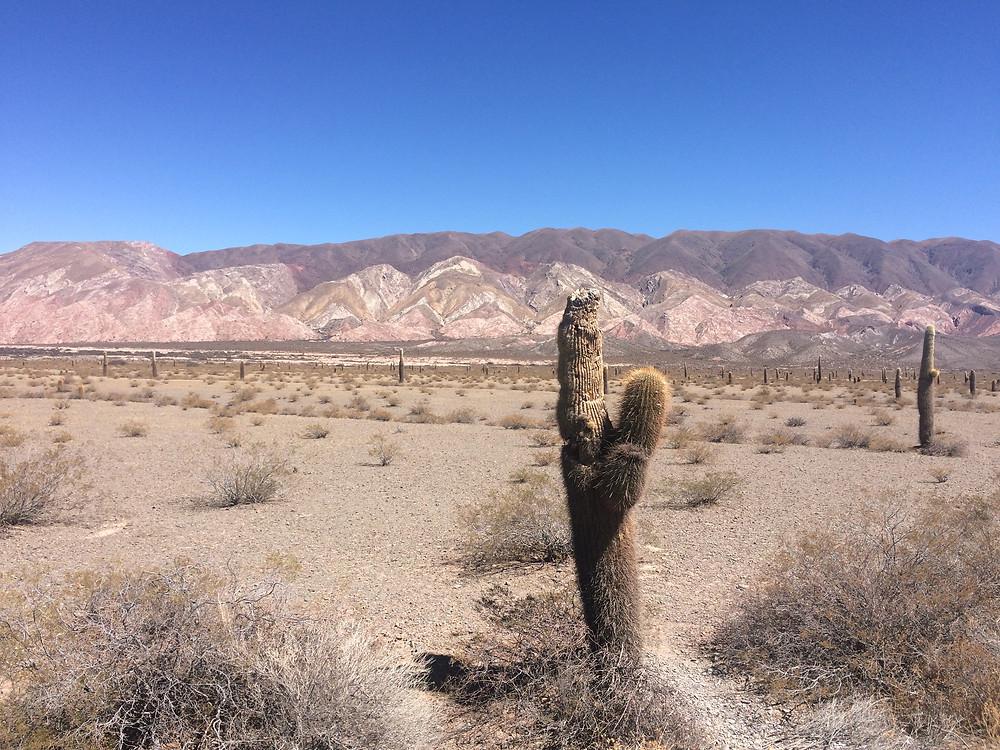 Cactus dans le nord