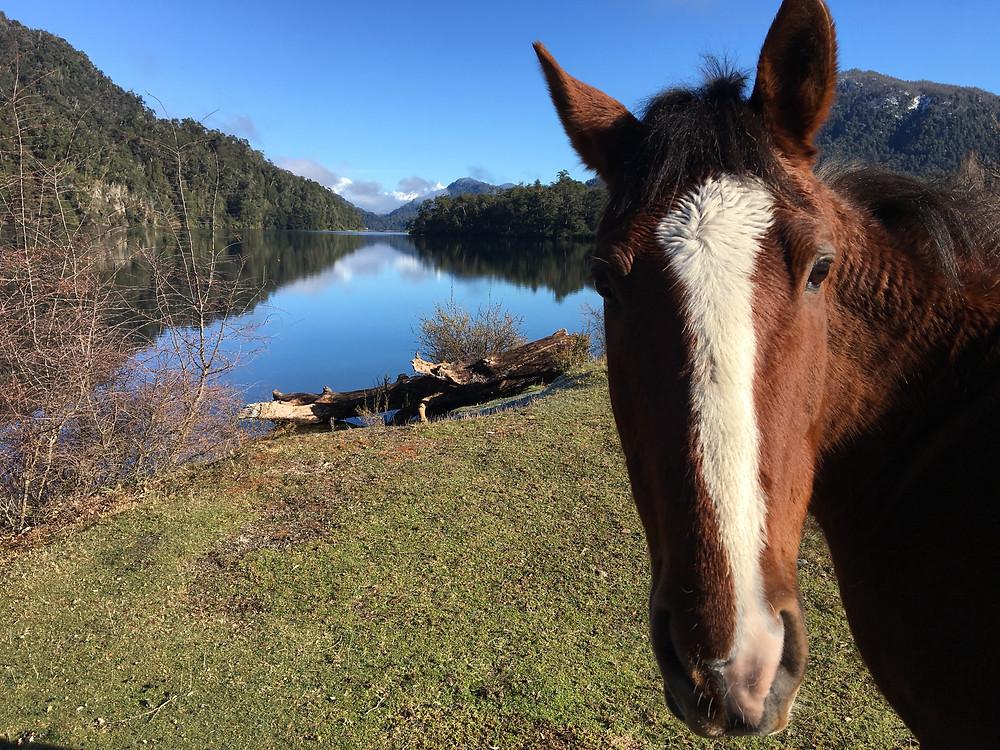 Route des 7 lacs et notre cheval du soir